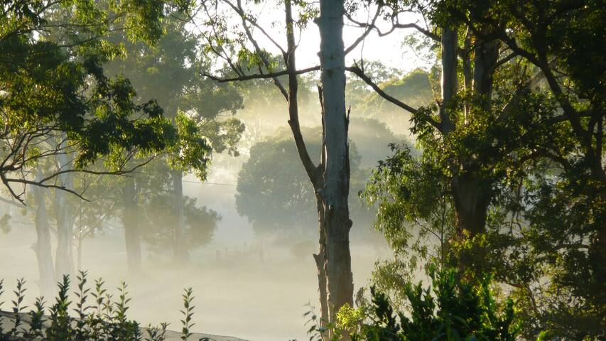 A beautiful surreal scene when the fog rolls in.