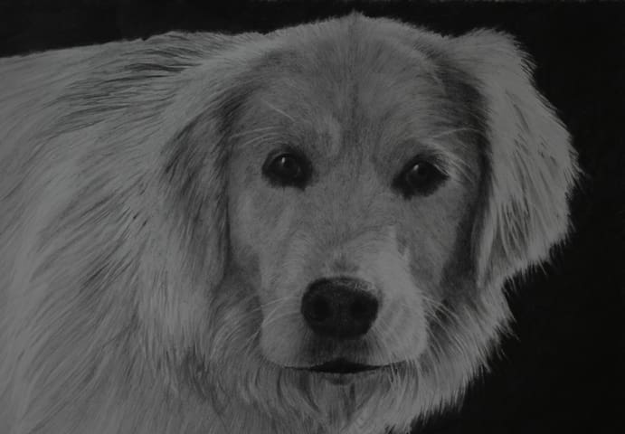 One of Lyn's graphite dog drawings.This is Lilah, Lyn's daughter's dog.
