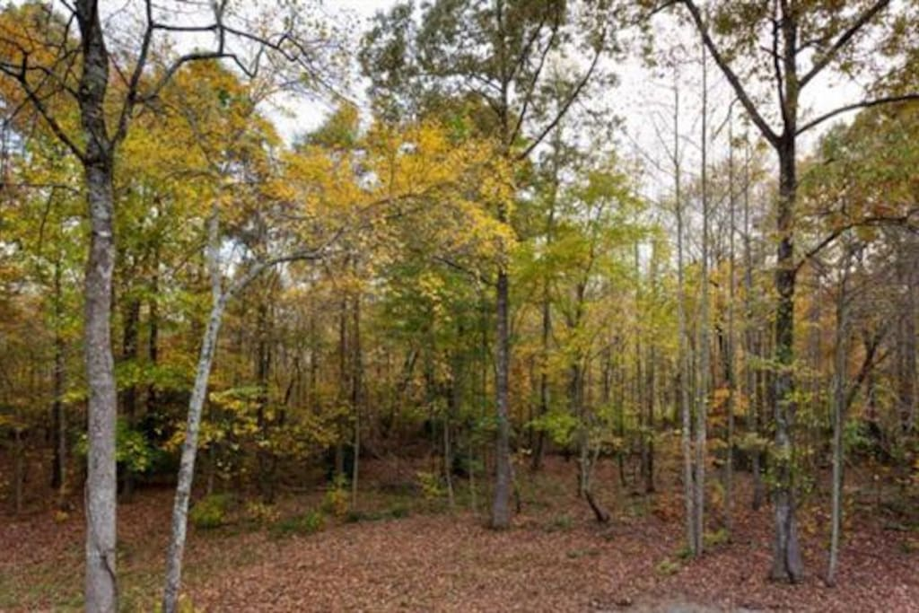 Relax and renew in the beautiful wooded area