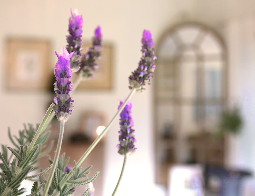 the beautiful lavender smell....