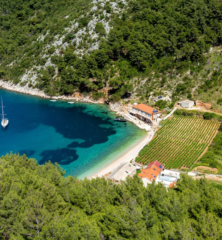 beach with turquoise water and vineyard