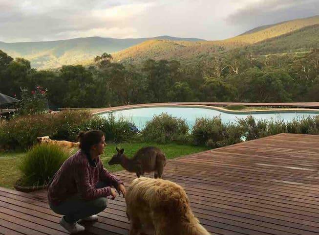 A country paradise - Kangaroo Manor