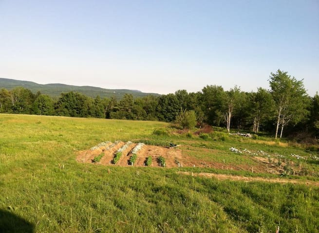 Beautiful June day on the farm