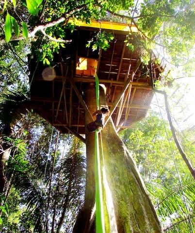 Alunaris Temple: dream above the canopy