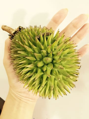 榴莲之乡 , durian town