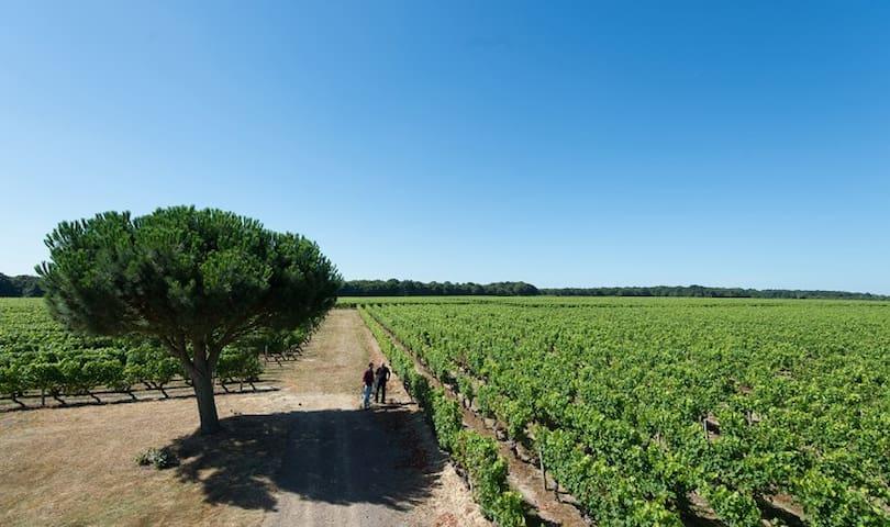 Chambres d'Hôtes au coeur des vignes en Anjou