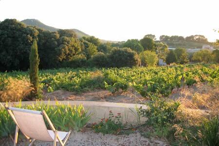Maison dans les vignes déco moderne - La Cadière-d'Azur - Casa