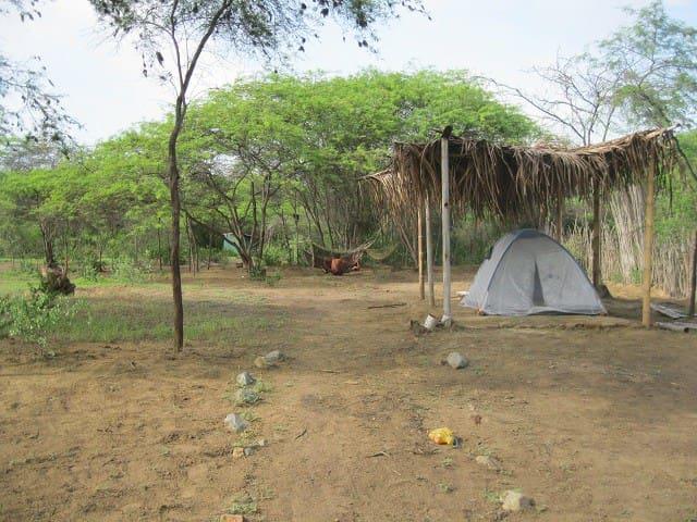 Camping Familiar  en Máncora - Máncora - Telt