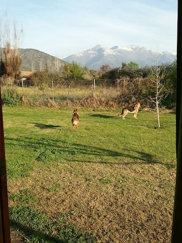 They are Randy and Pepa, two of ours seven dogs. In the background the hill Blanco and Corazón the highest mountains in Pirque.
