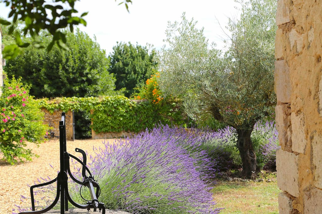 Lavender in The Courtyard
