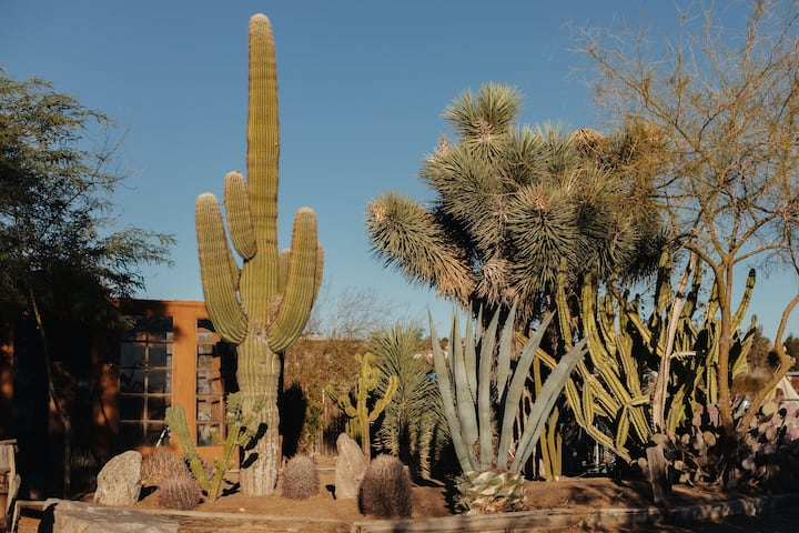 The Solarium* - a hidden cacti garden retreat