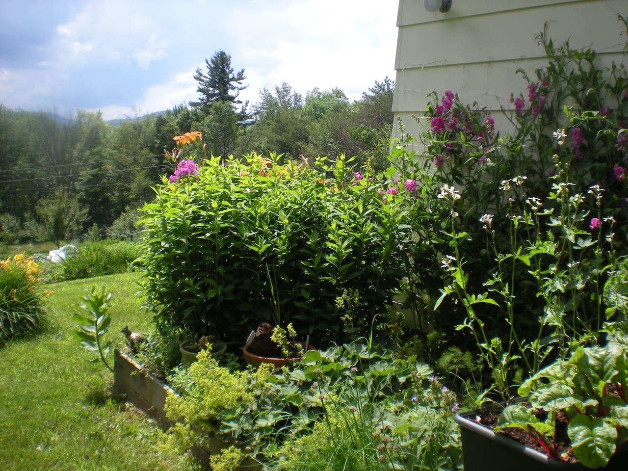 Green Mountain Sanctuary 2