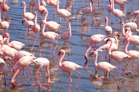 birdwatching from your doorstep - Walvis Bay