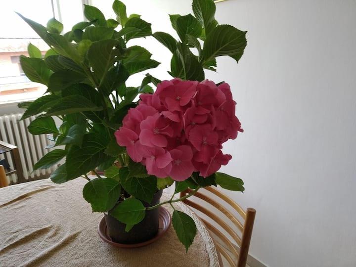 """""""L'Ortensia rosa"""" Il piacere dell'accoglienza"""