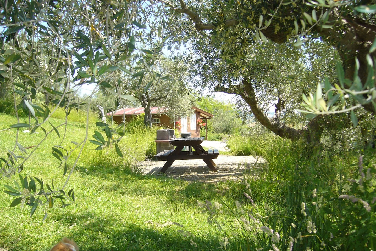 Our cabin 'delle sorelle' near the public fireplace between the old olive trees on the campsite.