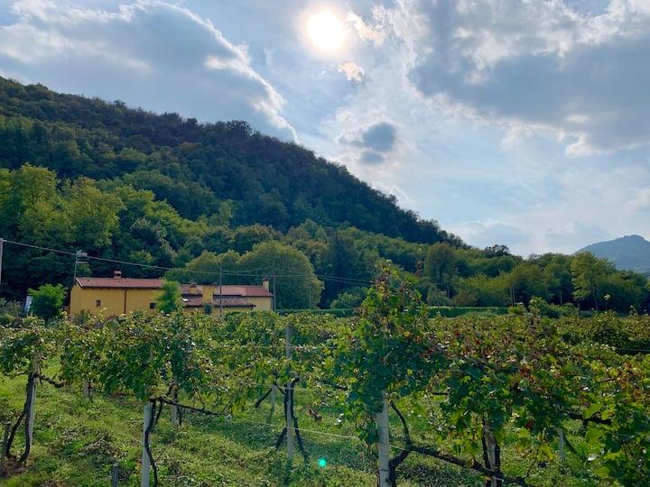 """Euganean Hills Natural Park: Casale """"Il Boschetto"""""""
