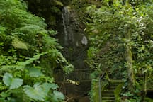 You will find multiple trails between our green spaces, with access to our natural waterfalls. (Encontrarás múltiples senderos entre nuestras áreas verdes, con acceso a nuestras cascadas naturales)