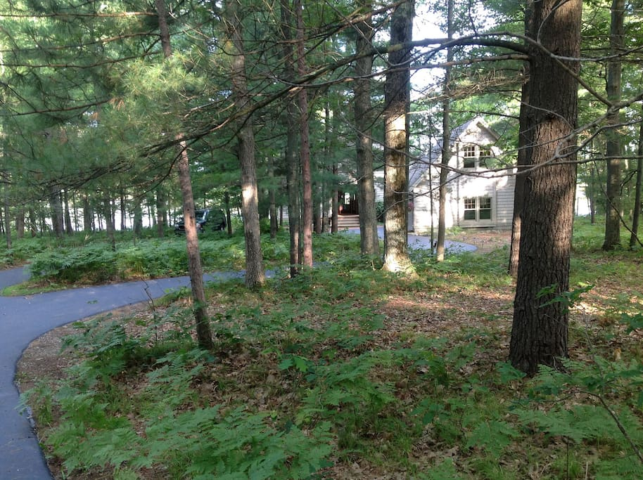 Beautifully wooded circle drive leads you to the house.