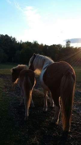 Cosy cottage - icelandichorse farm - Skövde - Bed & Breakfast