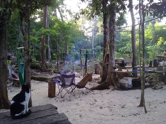 Fully equipped tents in jungle - Francisco Uh May - Zelt