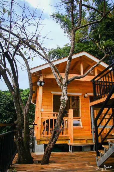 依树而建的木屋