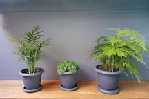The apartment is inhabited by different types of plants that will keep the guests a good company and fresh air.
