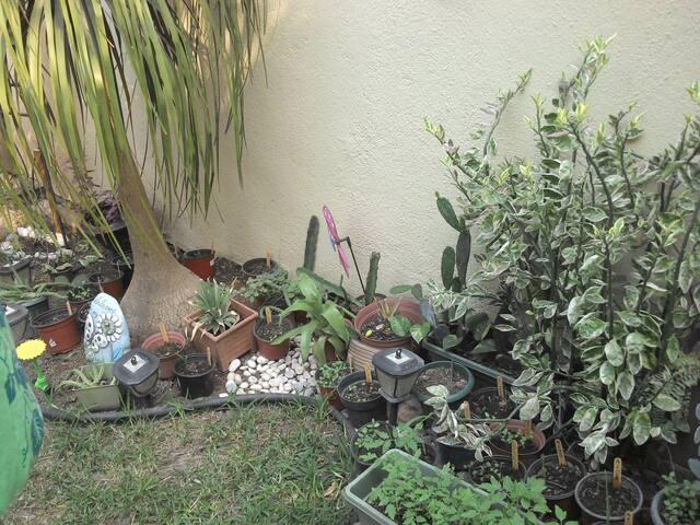 Jardín del frente