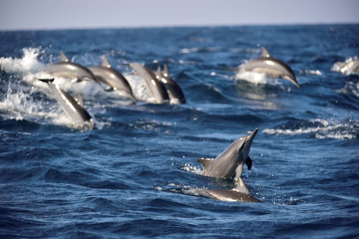 Dolphin & whale watching from November to May