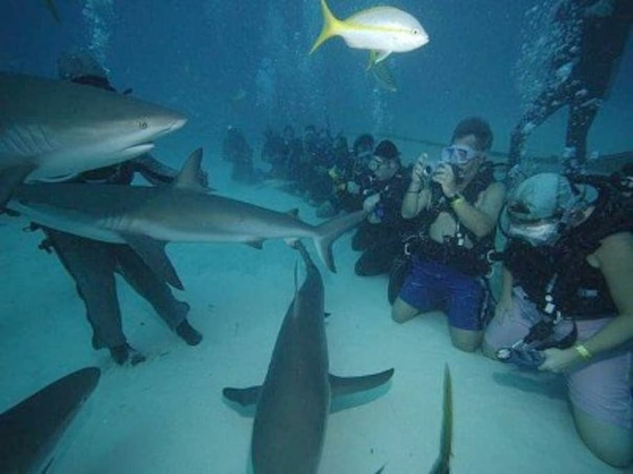 The kids love swimming with sharks...Yikes!