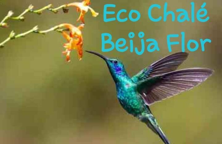 Eco Chalé Beija Flor