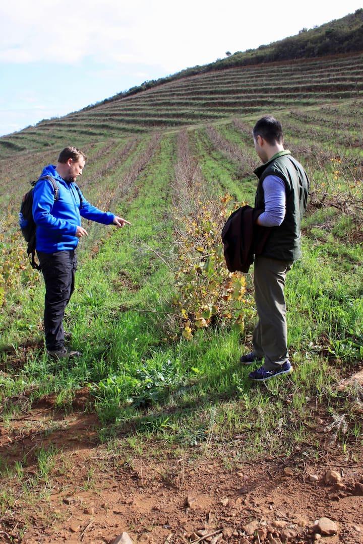 A short lesson on vineyard management