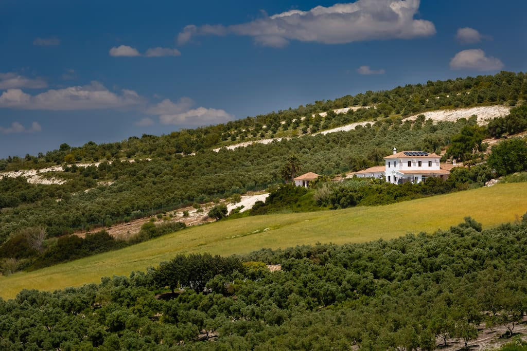 Vista exterior /olive trees