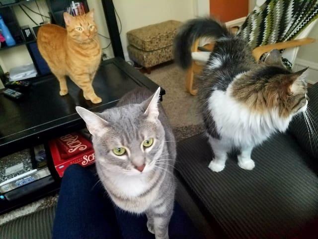 I HAVE CAT'S.... (left to right, Boris, Leela, Ghengis)