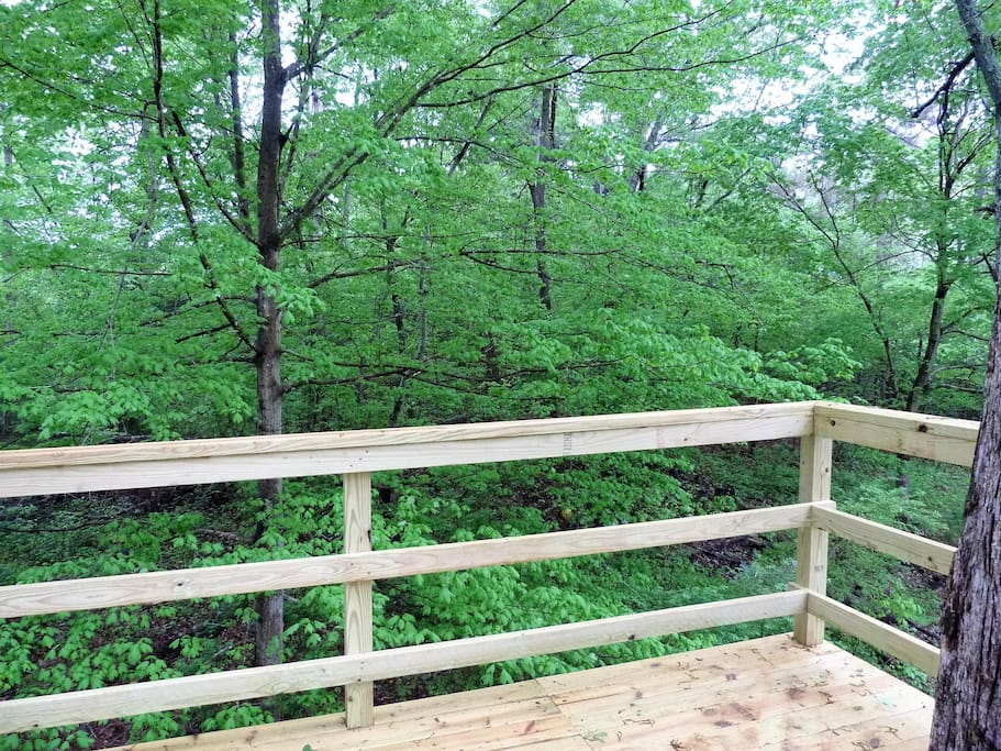 Luscious forest surrounds the observation deck