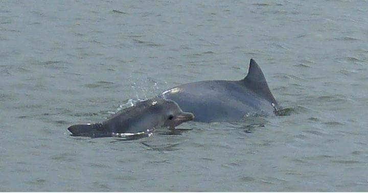 Recanto dos golfinhos!