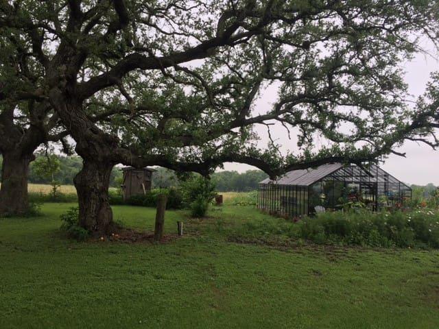 Beautiful Old Oak Trees Surrounding the Greenhouse...