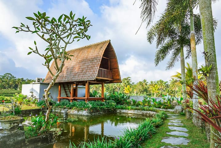 A Unique Lumbung house in the middle of rice field