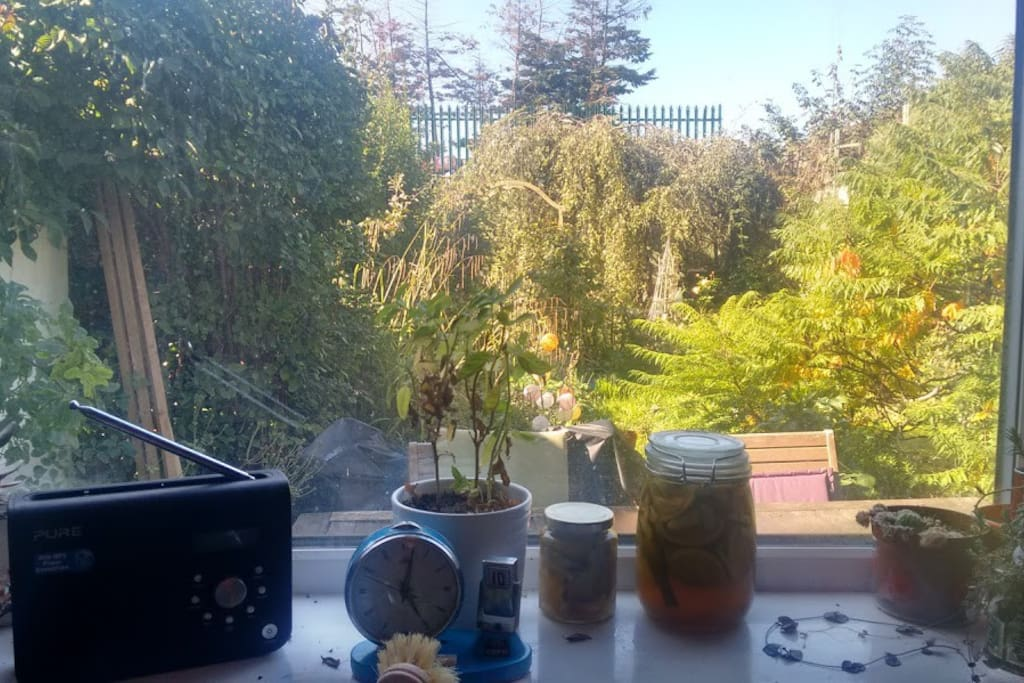 View of the 70 foot garden from the kitchen