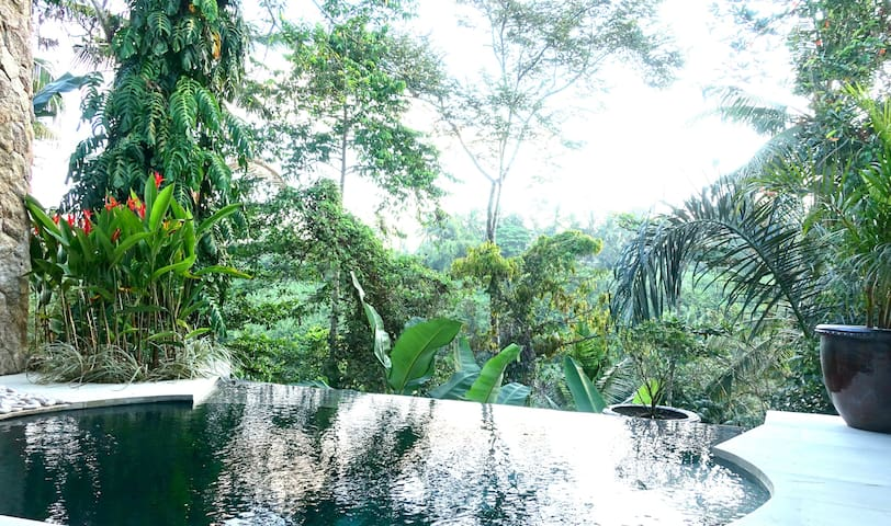 Your own plunge pool over looking the reven.