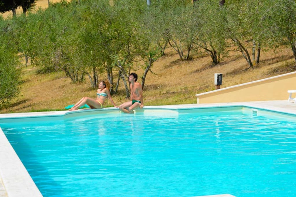 Swimming pool immersed in the olives