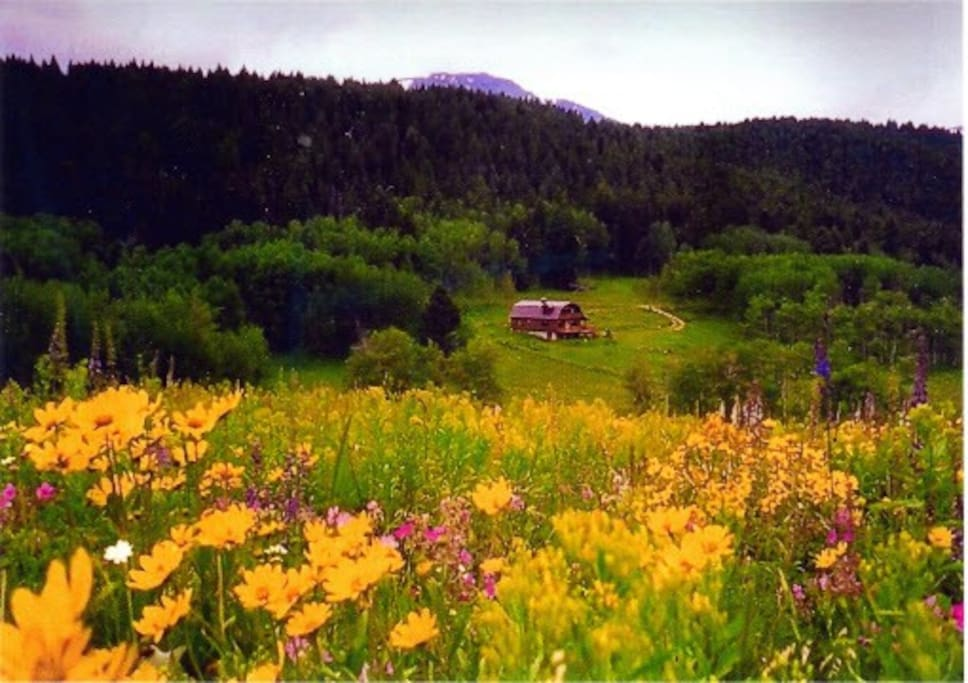 Beautiful Spring Flowers overlooking our Cabin