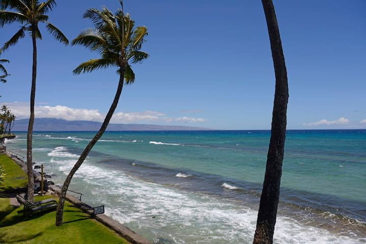 Ground floor! Oceanside! Spring Special! MS 702 - Lahaina - Apartment
