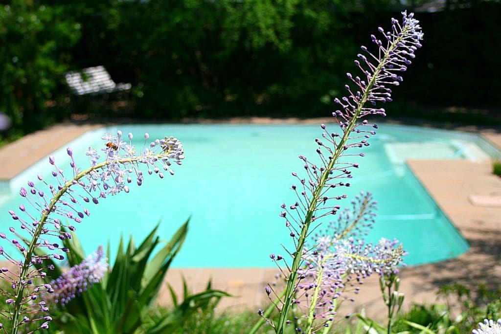 The indigenous garden and swimming pool