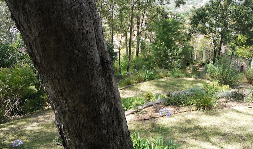 In the Rainforest - Balgownie - Flat