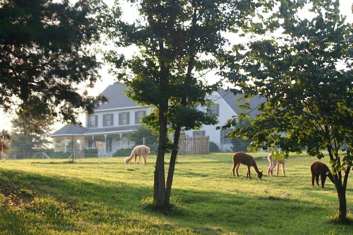 Paradise! Alpaca Farm, Maidens, VA - Maidens - Casa