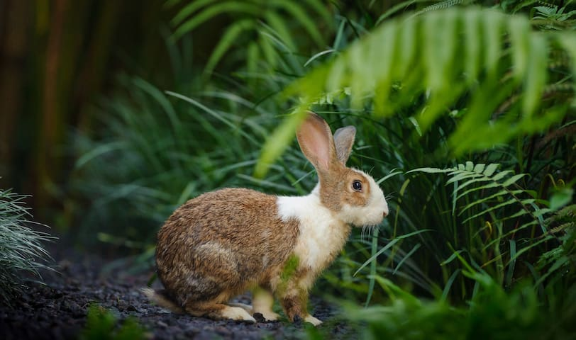 rabbit in the villa park