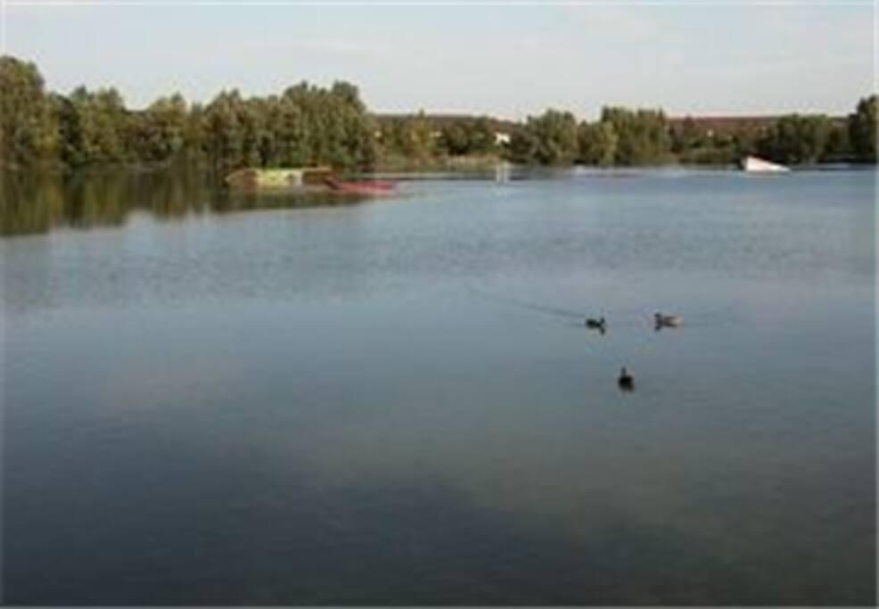 Rheinauer See - zum Baden und Wasserski