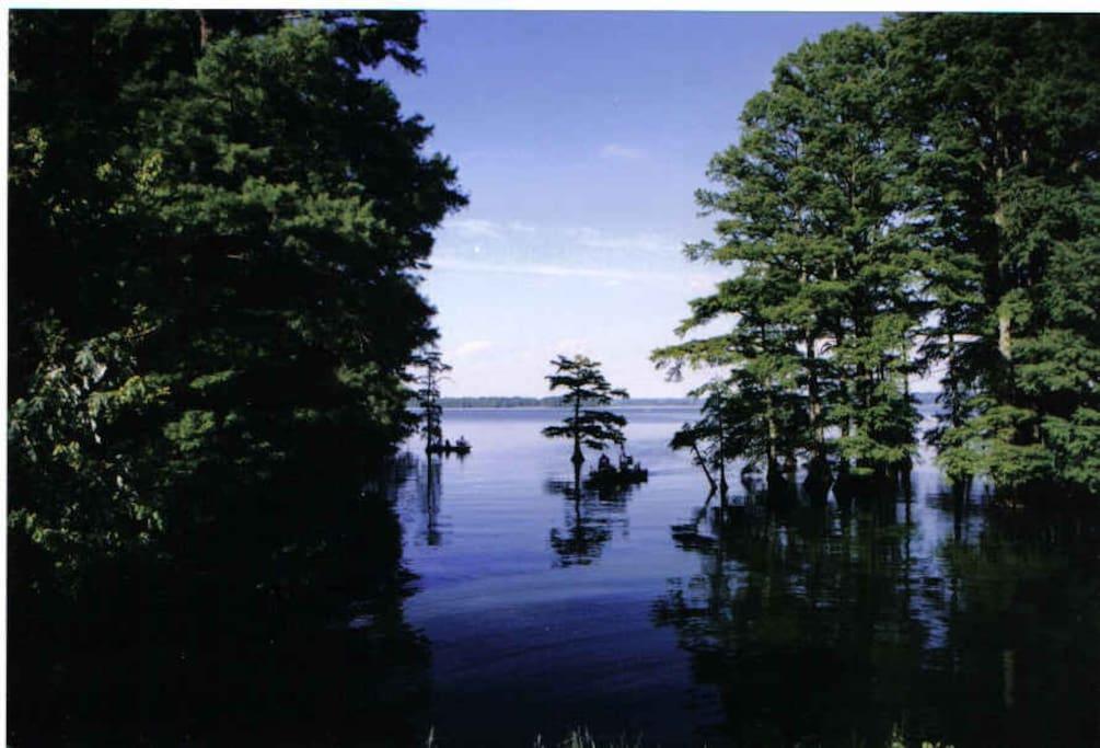 Historic Reelfoot Lake - 1/2 mile away