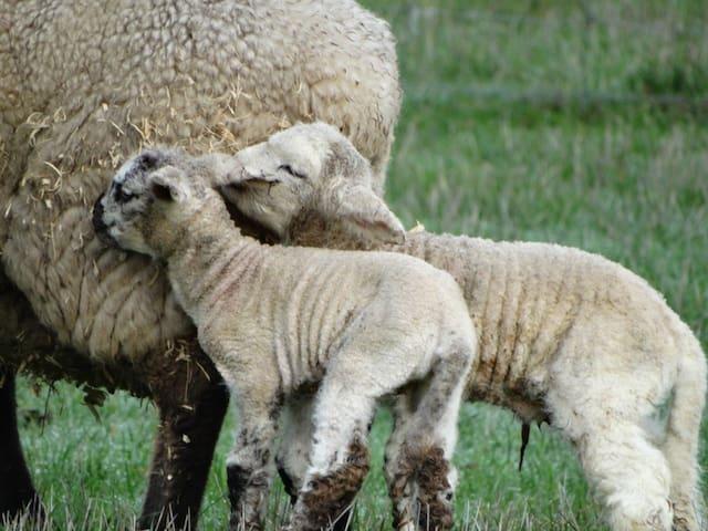 Ripples n Tonic Farmstay 2 bed Shearers Quarters