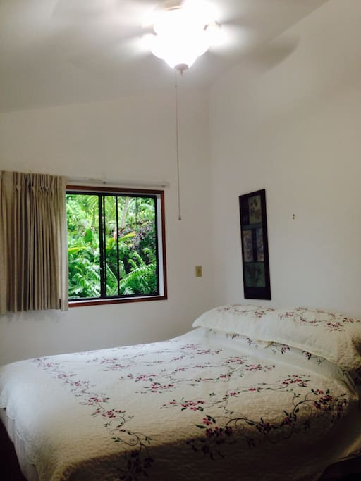 Ceiling fan and light , king bed